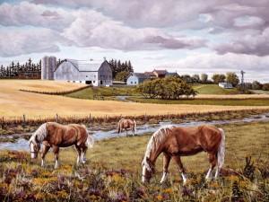 Belgians grazing
