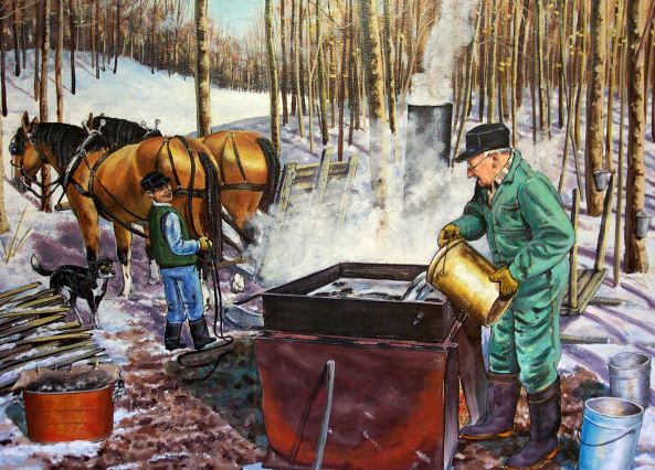 Making home made Maple Syrup