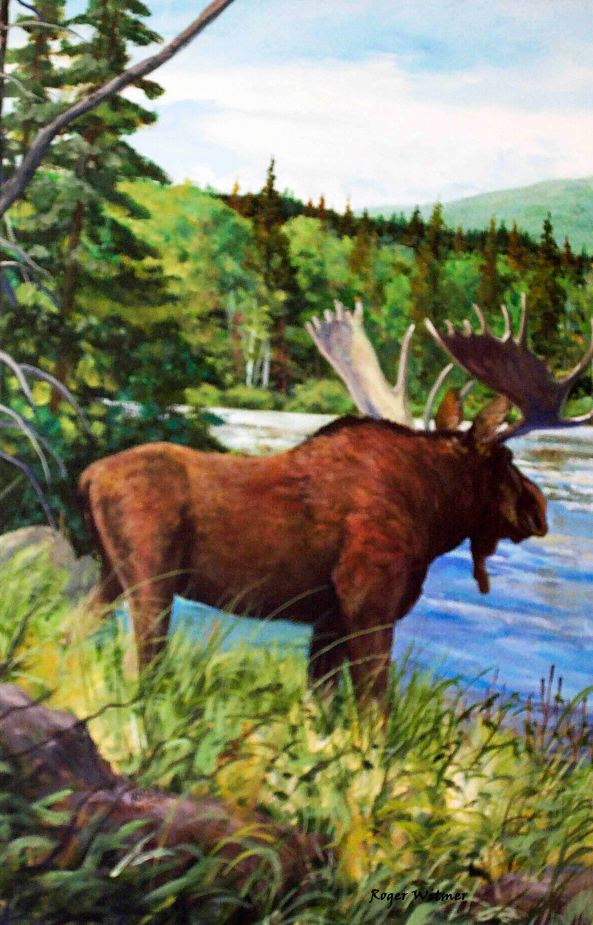 Moose copy