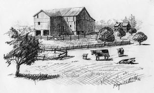 Sketch-Farm,cows 001
