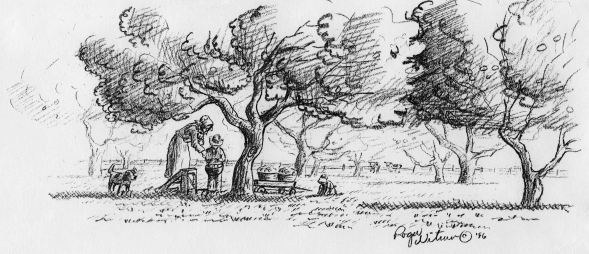 Sketch-picking apples 001